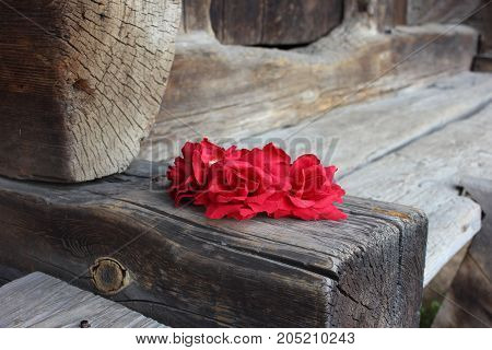 Artificial red flowers on old wooden surface. Red flowers on aged old wood. Red spot of flowers on vintage wooden floor.