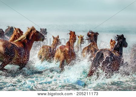 Batch of nice haflingers jumping in water