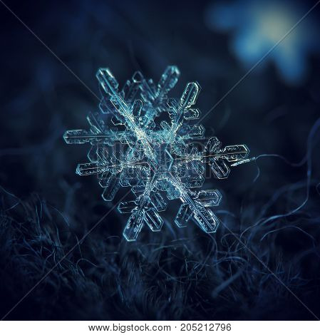 Real snowflakes at high magnification. Macro photo of two similar snow crystals with elegant complex shapes, long thin arms and side branches. Snowflakes glowing on dark blue background in cold light.