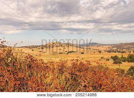 Golden fields, buckwheat, oaks, thunder rain clouds, farmland and cattle grazing land