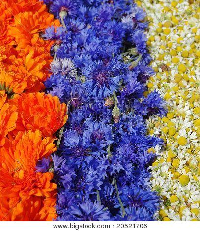 Marigold,cornflower,chamomile
