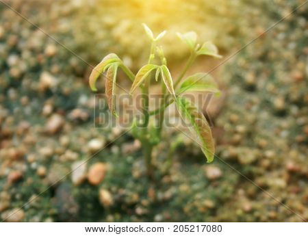 Seedling growth for texture with burst light