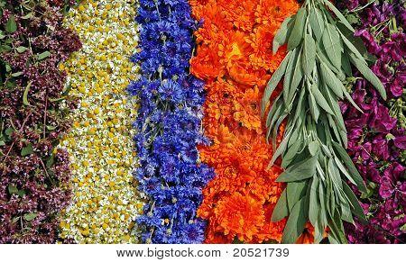 Thyme,chamomile,cornflower,marigold,sage,mallow