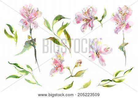 Collection romantic watercolor Summer garden alstroemeria wreath decoration flowers