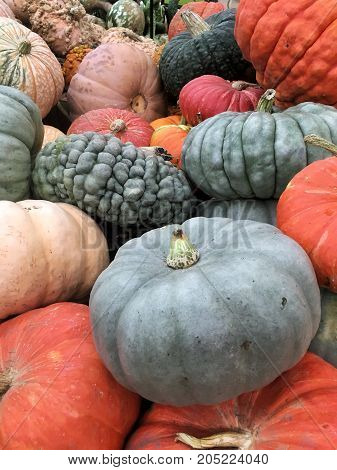 Gray and orange Pumpkins in a pile for Halloween