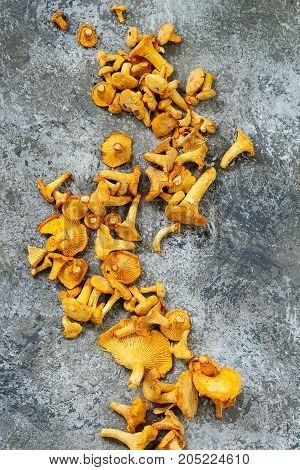 Forest Mushrooms Chanterelle