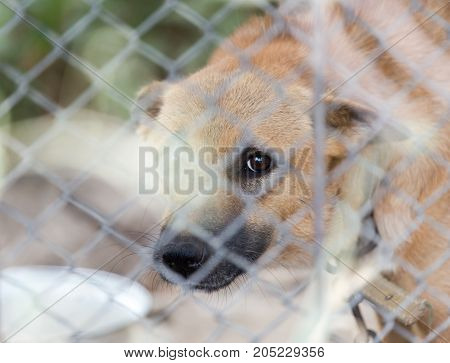 angry dog behind a fence . In a park in the nature