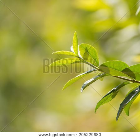 beautiful branch with leaves in nature . In a park in the nature