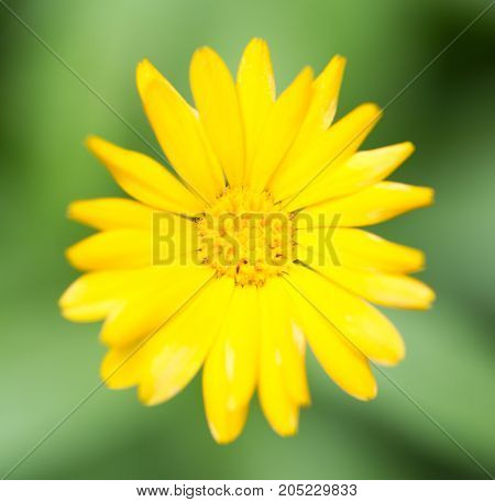 yellow flower in nature . In a park in the nature