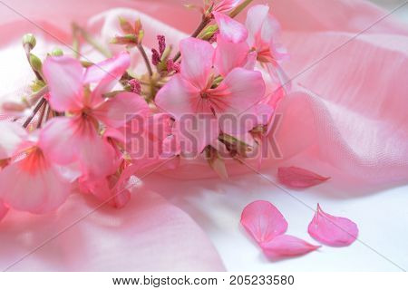 delicate still life of pink flowers of geranium on pink drapery