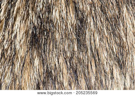 background of the dog's coat . Photo as an abstract background