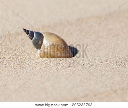 shell in the sand . In a park in the nature