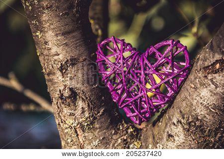 Wicker heart on the tree. Valentine's Day. Purple heart.
