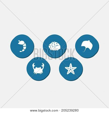 Collection Of Sea Star, Roe, Stingray And Other Elements.  Set Of 5 Food Icons Set.