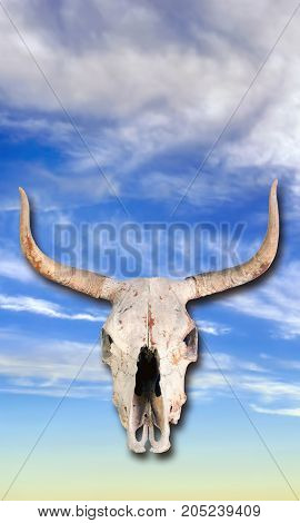 Cow skull in the blue sky heavens.