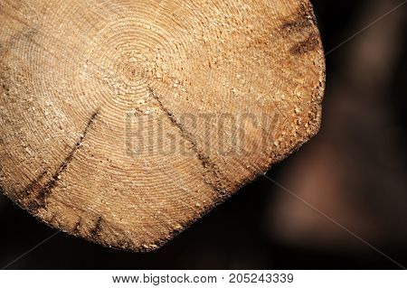 Old Felled Log Section, Close Up Photo
