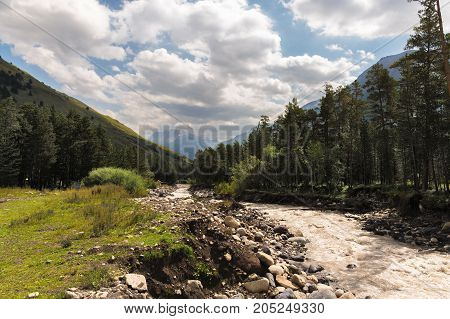 The Caucasian mountain stream flowing through the gorge is surrounded by a coniferous forest. Caucasian mountain landscape