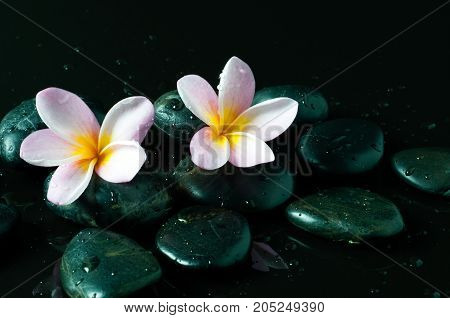 Zen Stones With Water Drops And Pink Frangipani Flowers On Black Background.