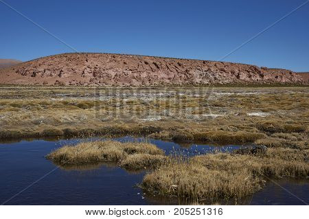 Wetland along a tributary of the River Lauca high on the Altiplano of northern Chile in Lauca National Park.