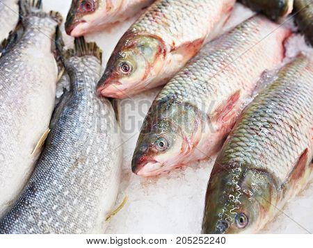 Cooled Fish Grass Carp And Pike On Store