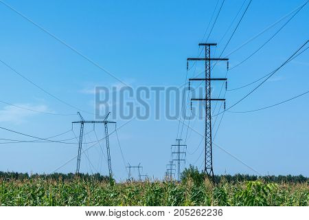 Two rows of pylons. In the foreground a field of corn. On supports hanging electric wires. Electricity high voltage. In the background the blue sky and white clouds. Visible on support insulators.