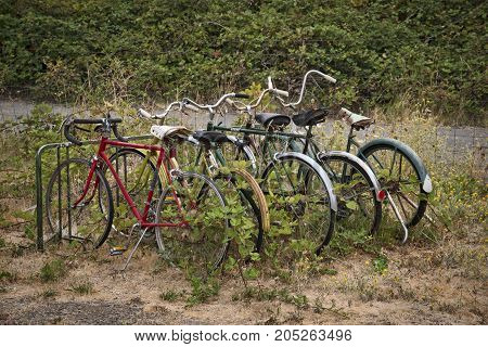 Several forgotten bicycles parked in a rack over grown with plants