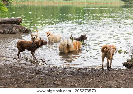 Different Dogs Playing In A Lake