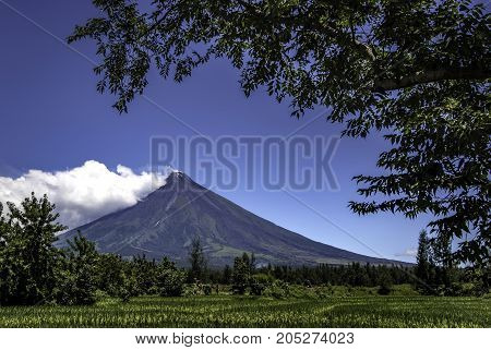 Mount Mayon Volcano with rice fields, Legazpi City, Bicol, Philippines