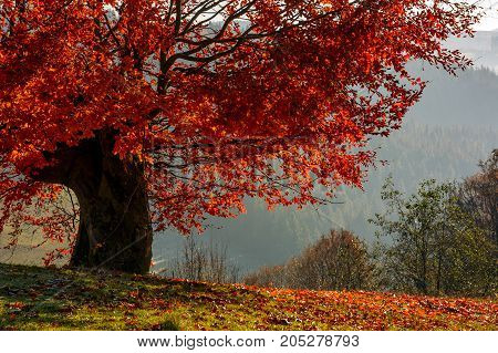 Tree With Red Leaves On Hillside