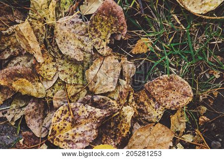 Dry Leaves On The Grass Ground In A Beautiful Autumn Forest.
