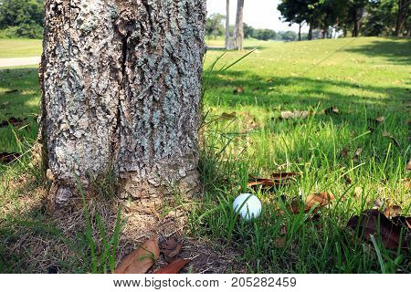 Golf Ball at Tree Bottom Obstruction Rule 24