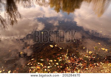 Autumn etude with the fallen-down yellow leaves on a water smooth surfacea