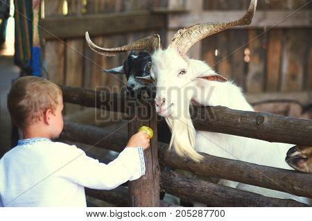 the child feeds the animals in the zoo