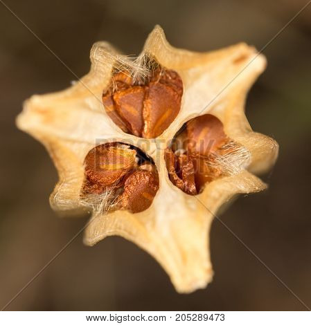 dry flower bud . In a park in the nature
