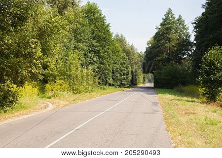 arch of trees on a deserted asphalt road with