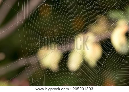 spider's web. close-up . In a park in the nature