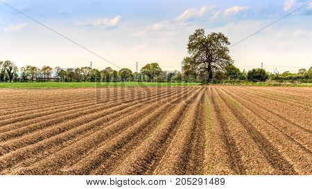 Summer uk landscape view of a farmers field which has just been ploughed looking down the lines towards a distant tree