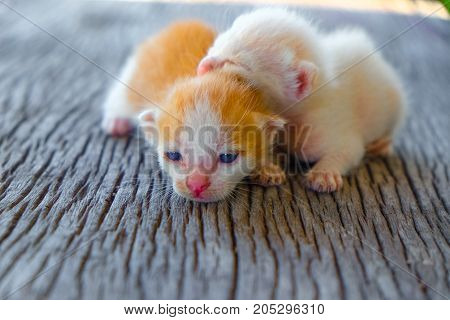 Two adorable kitten lying on a wooden floor.