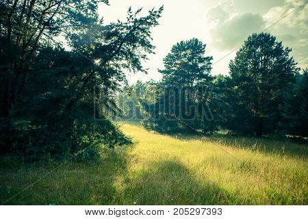 Photo of picturesque forest landscape with cloudy sky