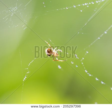 spider web with water drops . In a park in the nature
