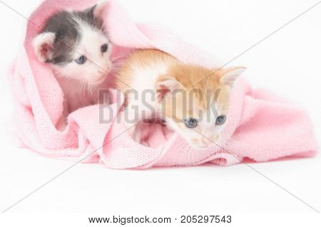 Two cute baby kittens wrapped in pink blanket
