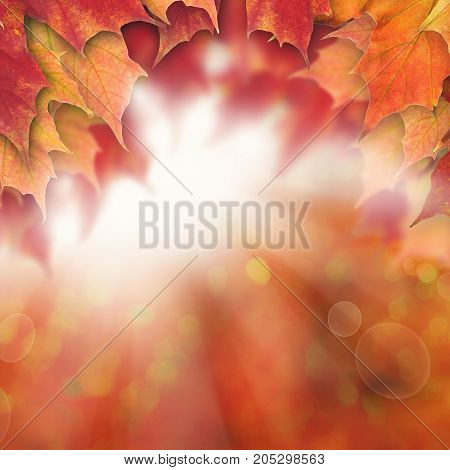 Autumn Background with Fall Maple Leaves and Sun Glow Abstract Autumn Background