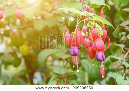 Beautiful flower and green leaf background in garden with sunlight at sunny summer or spring day for postcard. beauty decoration and agriculture idea concept design.