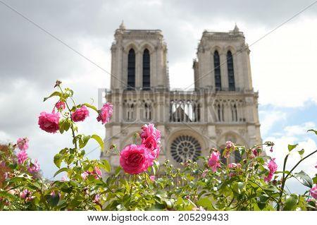 Flowers against a Notre Dame de Paris.