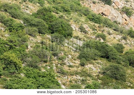 rocky slopes in the mountains . . In a park in the nature