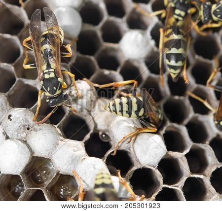 Wasps on comb . In a park in the nature