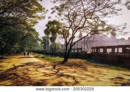 Tall Tree By Ankor Wat