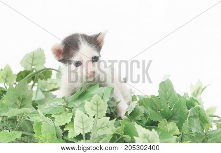 Cute baby kitten posing in green leaves - studio shoot