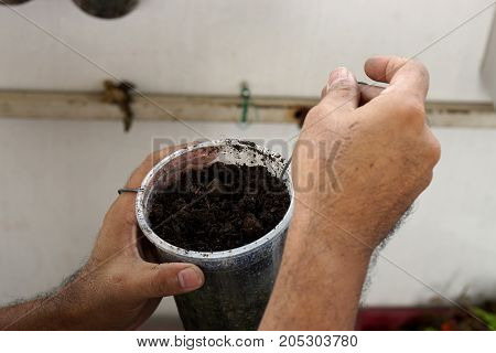 Hand of man prepare soil in glass for plant the young tree