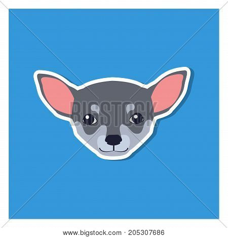 Little head of Chihuahua dog front view flat icon on blue background. Vector illustration of smallest breed of dogs. Chihuahua's eyes are large, round in shape, very expressive, not bulging.